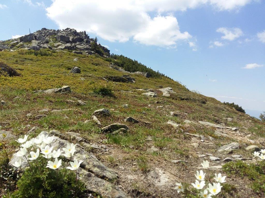 Babia gora szczyt